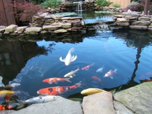 DIY Backyard Pond